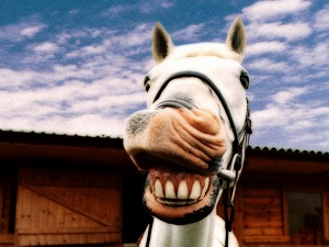 smiling-horse