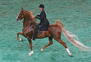 2009_Worlds_Championship_Horse_Show_(3877971589)